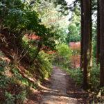 一人で御岳山から日の出山の紅葉撮影ハイキング!帰りには温泉も!②初心者にもめちゃくちゃおすすめなハイキングだった!